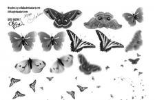 蝴蝶PS笔刷