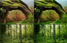 深林树木调色PS动作