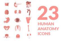 23枚人体解剖学图标,AI源文件
