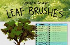 叶子树叶Photoshop画笔