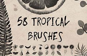 58种热带植物水果 Photoshop笔刷