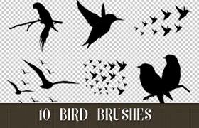 10种鸟类剪影Photosho笔刷