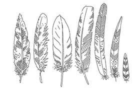 7支手绘羽毛PS笔刷