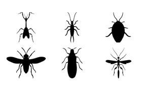 20种昆虫剪影PS形状,csh格式