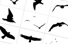 鸟类飞禽Photoshop自定义形状